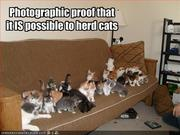 cat possible to herd cats