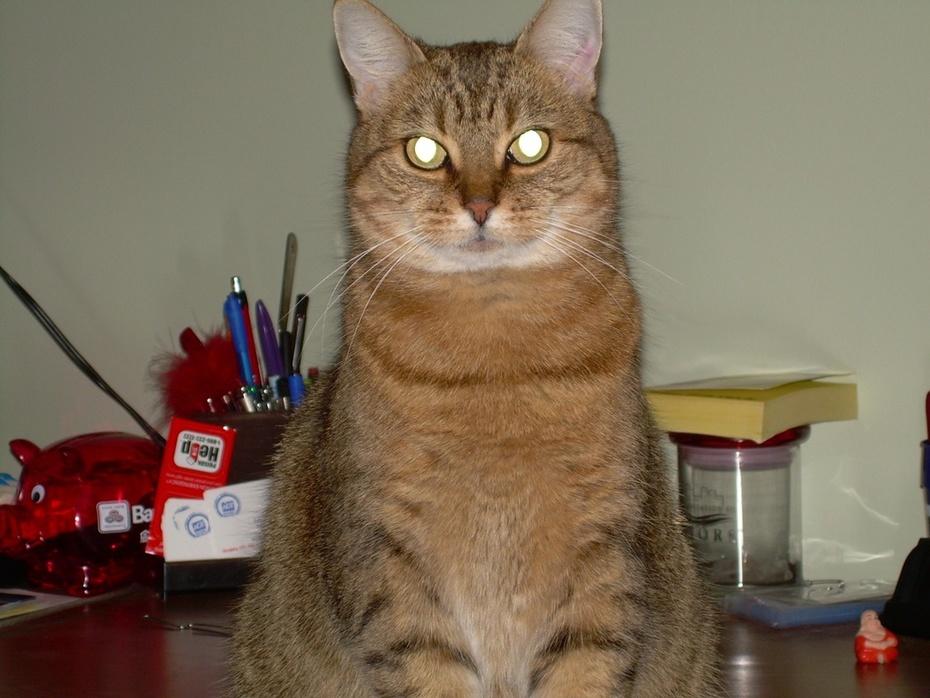 Gina Kitty