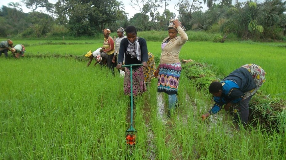 Munjua Integrated women: training with new weeders