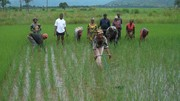 Tah-Ngke: training on new weeders