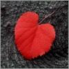 avatar_leaf