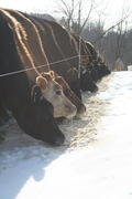 Broadrun Farms