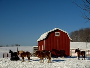 Horses in Wisconsin Winter Wonderland