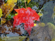 Autumn Under Glass