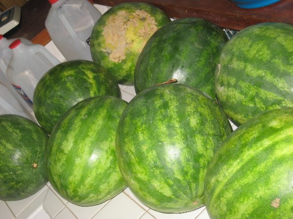 Watermelons I Bought Today
