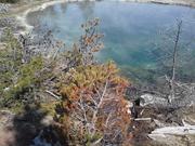 Morning Glory Hot Pool Yellowstone