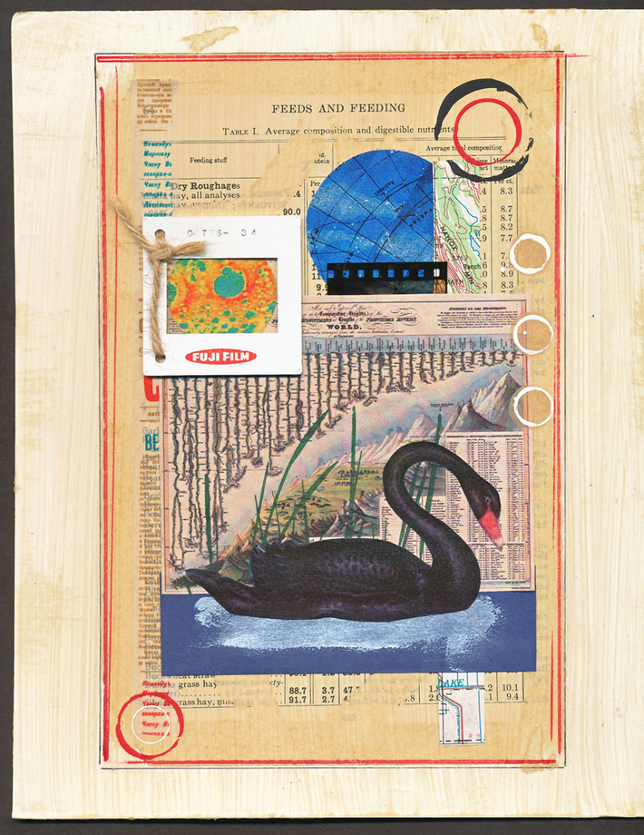 8 x 10 inch collage