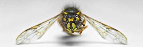 Insekt 06