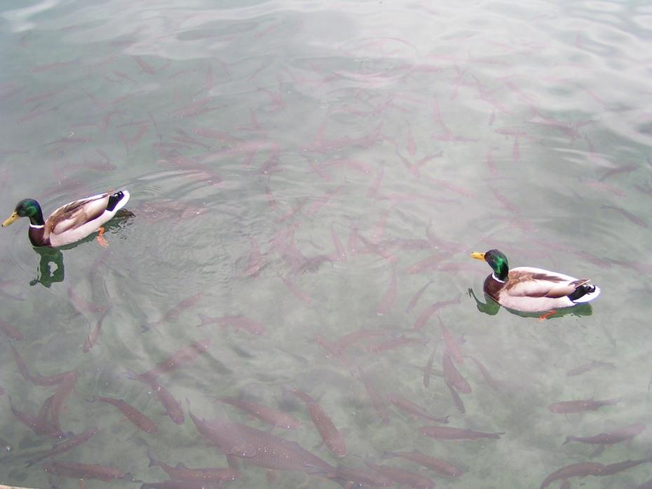 Plitvicei-tó 2010. (50)