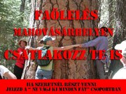 Aki teheti, csatlakozzon, veszélyben vannak Marosvásárhely fái!!!