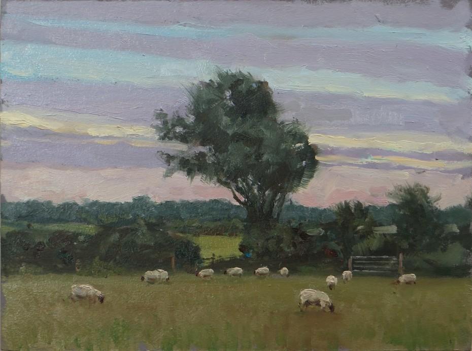 Sheep Grazing at Dusk
