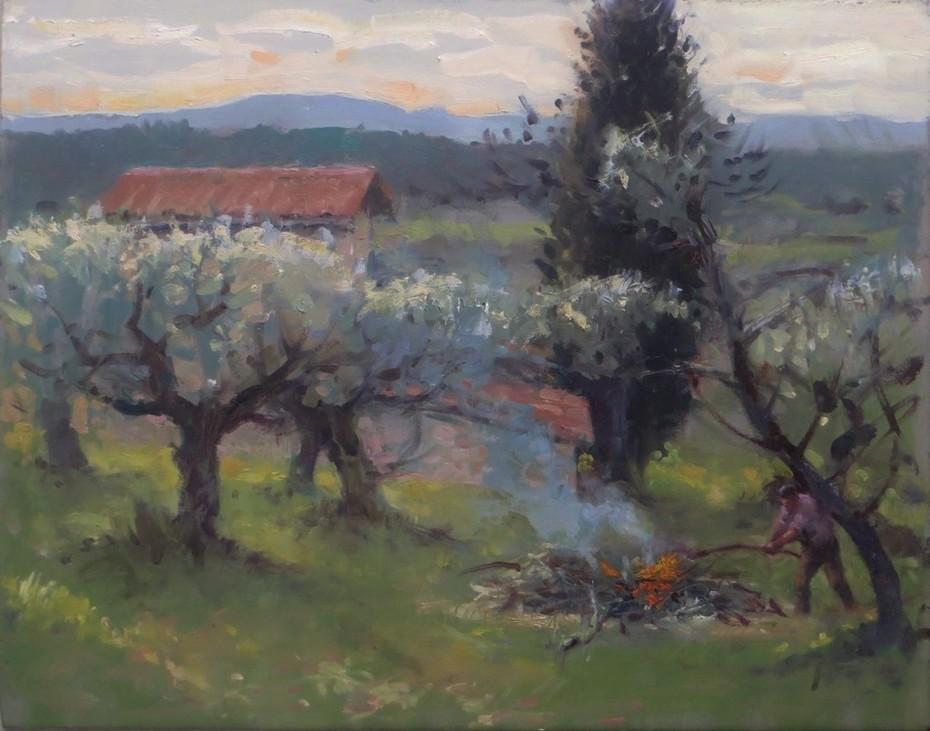 Evening, Burning Olive Wood, Tuscany.