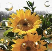 sunflowers growing in my back yard... look like this i hope