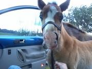 Brandy wants a car ride
