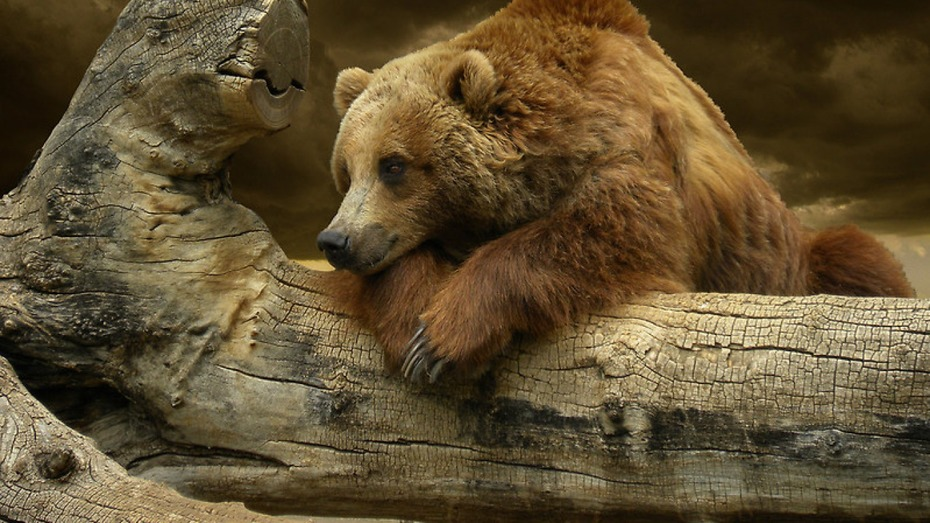 Bear5 I want for my Theme