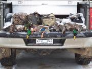 Bird Hunting 7