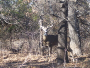 Great 8 Point Buck