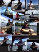 2013 Larson boat catch!