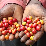 Análisis de los precios del café