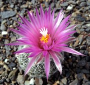 Kaktusz kedvelők oldala