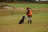 Dogs and Dog Training