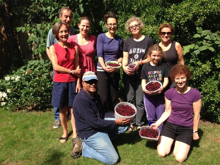 Kensal to Kilburn Harvesters Mulberry pick