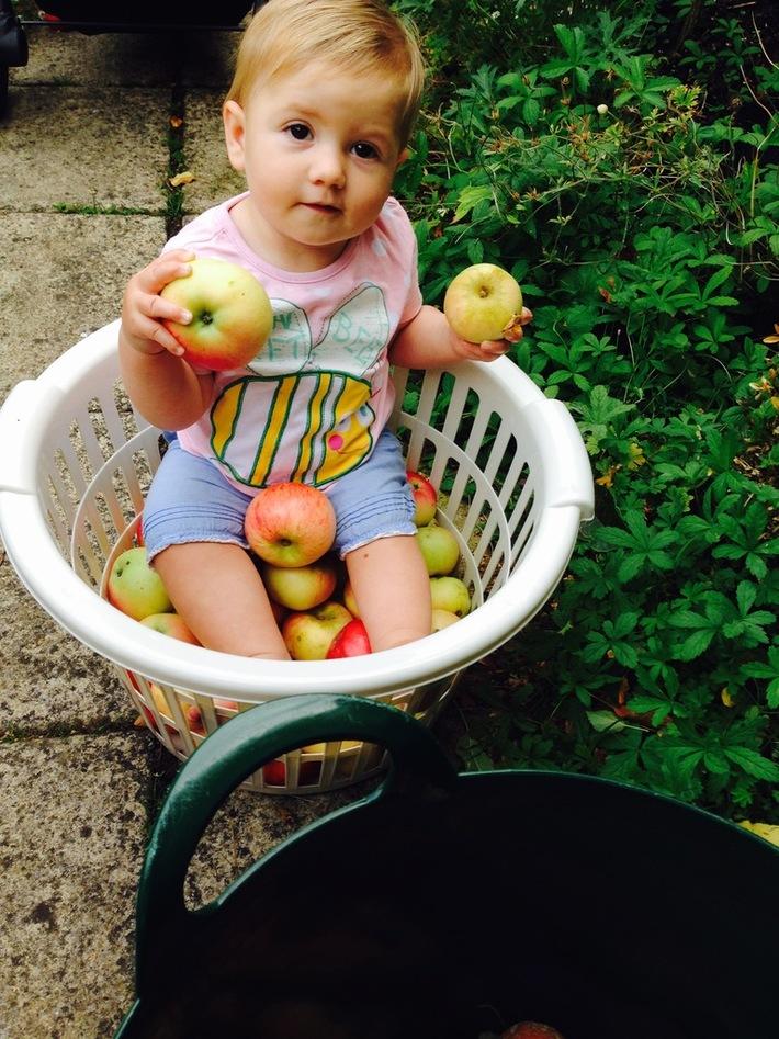 baby in basket of apples