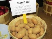 Kiwi Potato