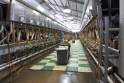 Milking parlour for 90 cows