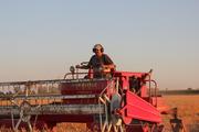 Swathing Mixed Grain 2012