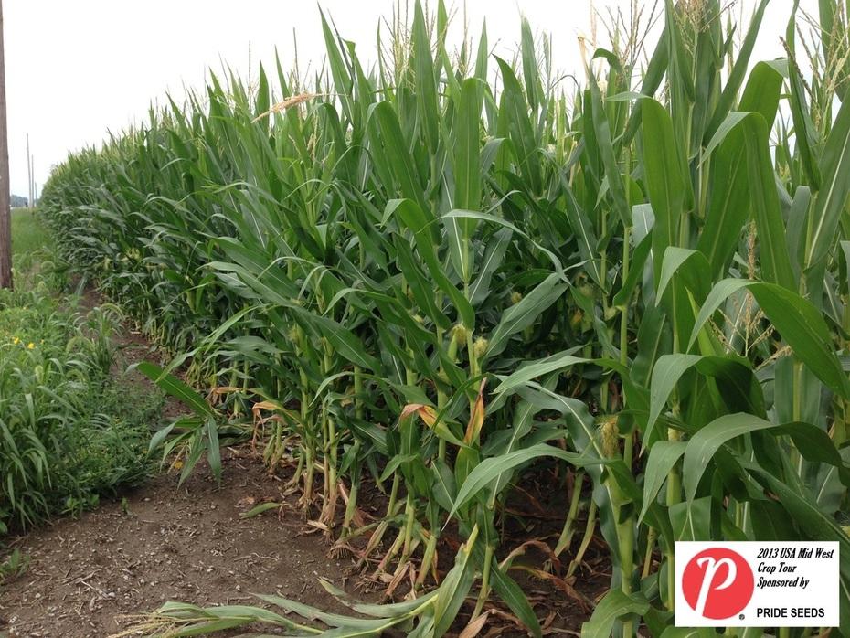Ohio Corn 2