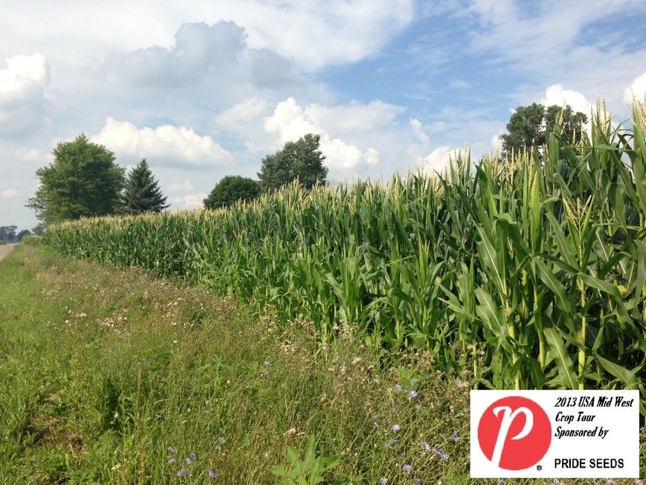 Michigan Corn