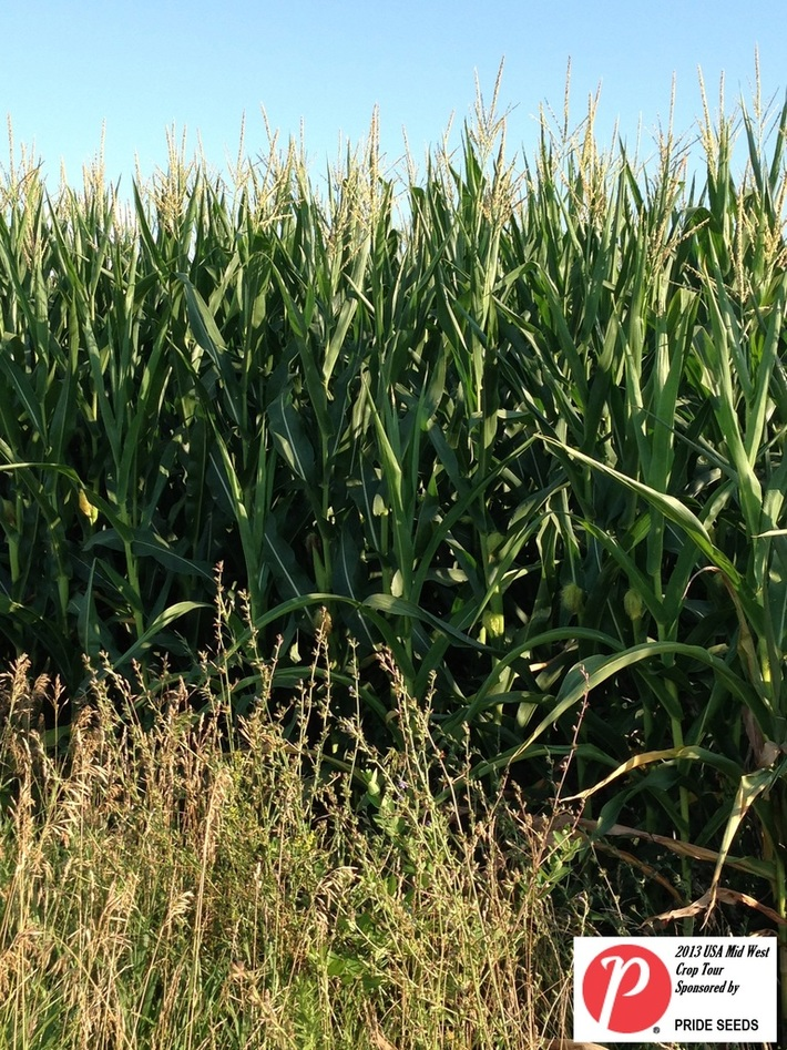 Missouri Corn 3
