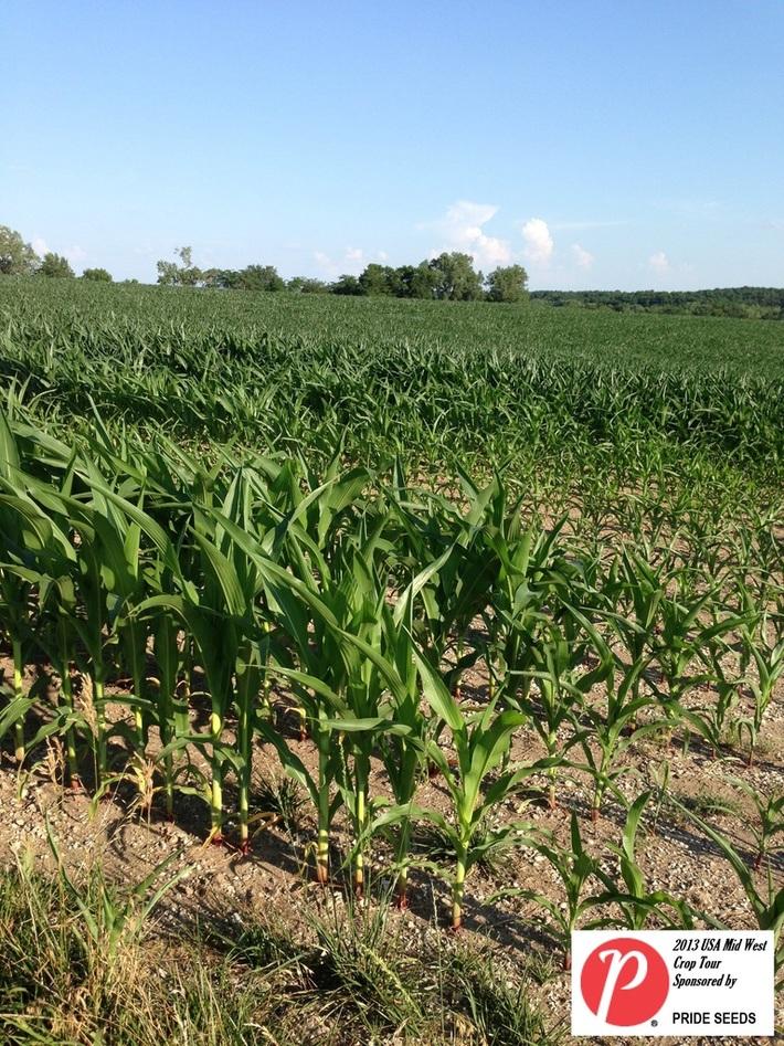 Missouri Corn 1