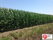 Moe Agostino's Midwest Crop Tour 2013
