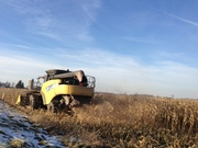 Combining corn in Perth County