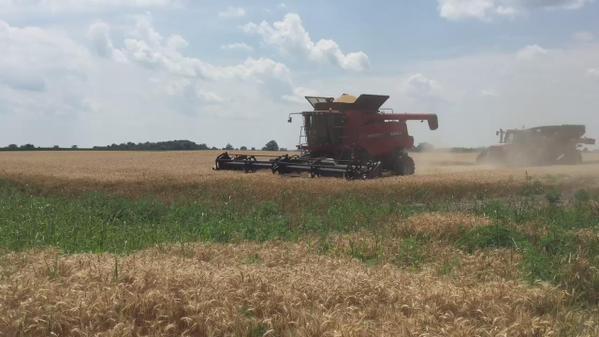 Wheat Harvest North of London