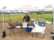 Backyard Farm & Erin framers' market (Mississauga)