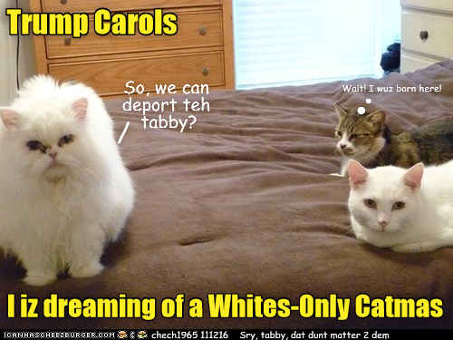 Trump Carols: [one white cat to another] I iz dreaming of a Whites-Only Catmas [I'm dreaming of a whites-only Catmas/Christmas] - tabby thinking 'Wait! I was born here!'