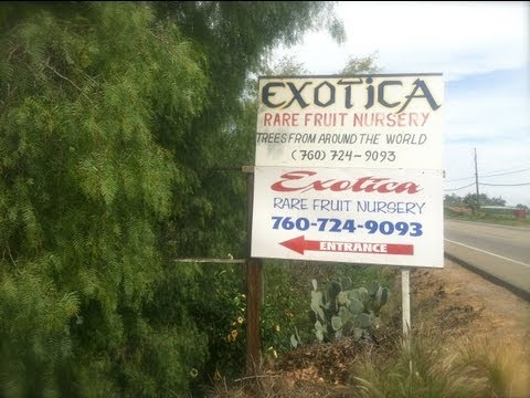 EXOTICA Rare Fruit Nursery