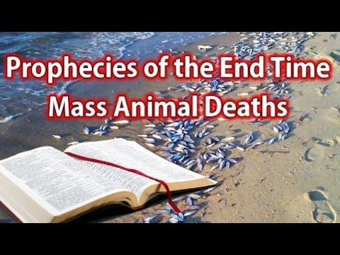 Prophecies of the End Time Pt. 4 - Mass Animal Deaths