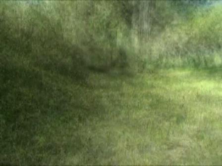 Walk, 2005