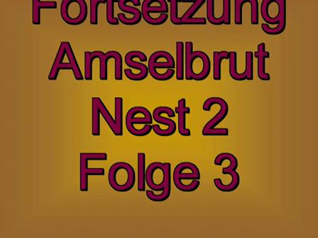 Amselbrut Folge3