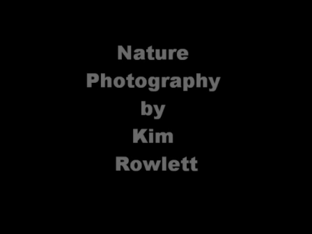 Nature Photography by KIM ROWLETT