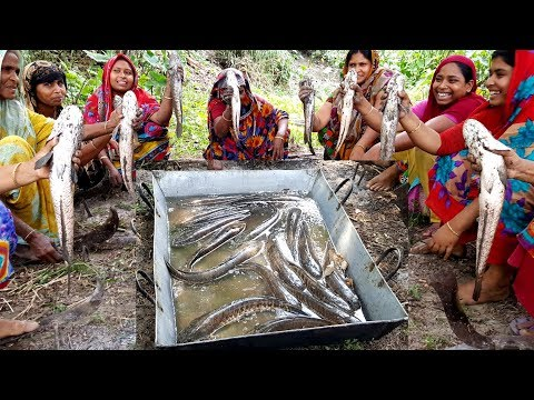 Snakehead Murrel Fish Curry (Shol  Vuna) - 20 KG Fish & 40 KG Rice Cooking - Eating While Storming