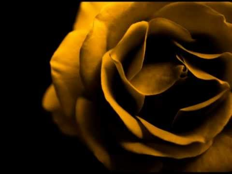 Aracy Cortes - Rosa de Ouro - Elizeth Cardoso - Pot-Pourri c/ Rosa de Ouro.