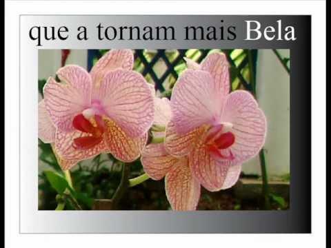 Luz Cor e Flor  Bençãos