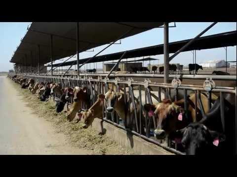 Sierra Desert Breeders | Company Profile
