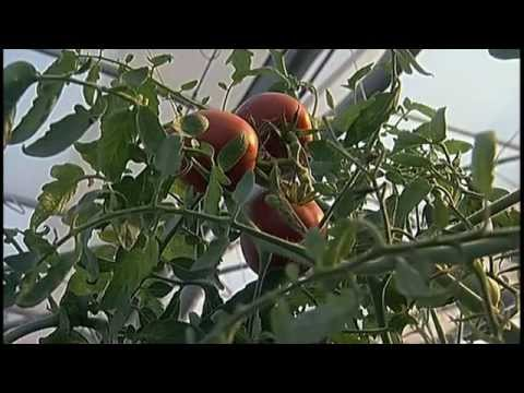 Scientists Under Attack (2009)  FULL Documentary GMO