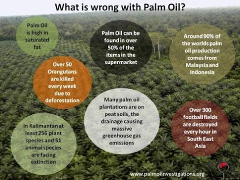 Veganism - Palm oil is destroying the rain forest